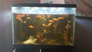 Fish Tank w/ Stand for Sale in Lexington, KY