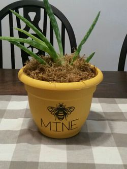 Real Aloe Plant In Cute Bee Pot. for Sale in Wellington,  OH