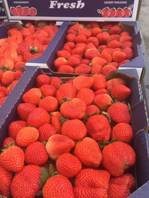 Strawberry For sale for Sale in Plant City, FL