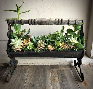 Vintage piece w/ succulents for Sale in San Diego, CA
