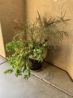 2 large pots for Sale in Chandler, AZ