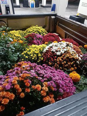 Flowers for Sale in Whittier, CA