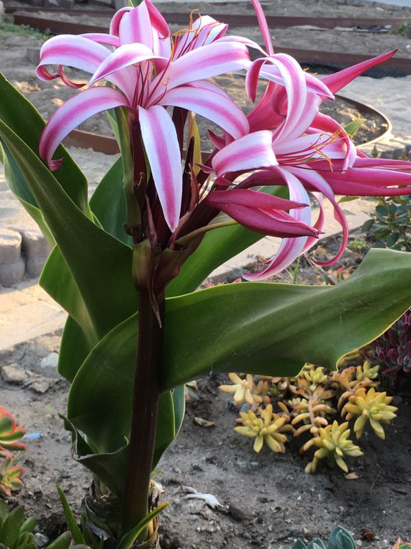 Beautiful tropical flower plant
