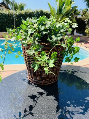 Vintage Bamboo Basket Plant decor for Sale in Pico Rivera, CA