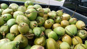 Cocos 3x $5 for Sale in Deltona, FL