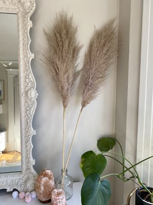 TWO Pampas Grass reeds, 4ft tall for Sale in San Francisco, CA