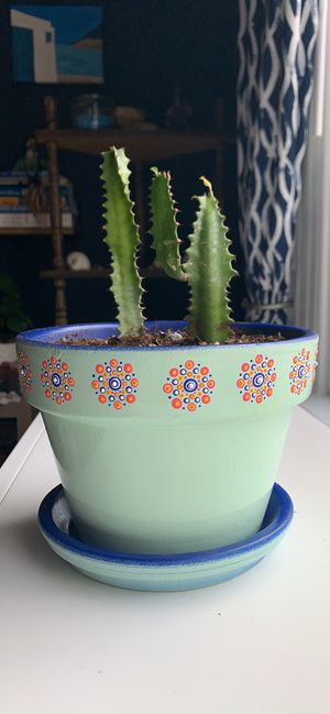 Euphorbia Trigona in hand painted clay pot for Sale in Denver, CO