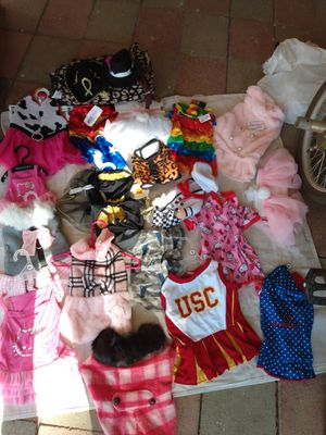 Dog clothes, pants for Sale in Menifee, CA