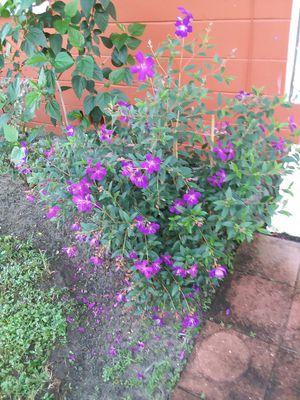 Plants for Sale in Avon Park, FL