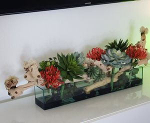 Aquarium with succulents and driftwood for Sale in Homestead, FL