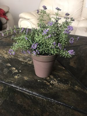 SMALL FAKE PLANT for Sale in Winter Garden, FL