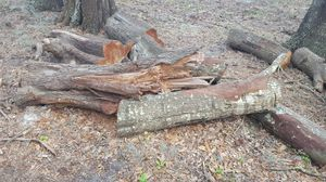 Free Firewood - Fort Meade Fl 33841 for Sale in Fort Meade, FL