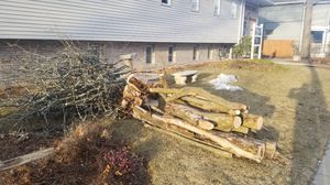 Free firewood in Brighton for Sale in Waltham, MA