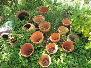 Flower pots for Sale in Saint Pete Beach, FL