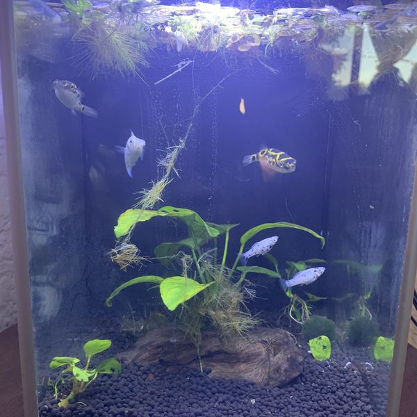 2.6 Gallon Aquarium