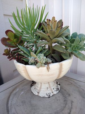 Vase with different succulents for Sale in Montclair, CA