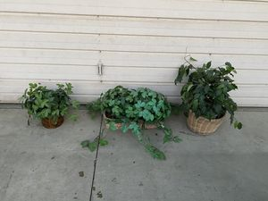 Fake plants for Sale in Bakersfield, CA