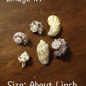 Shells - Various Sizes And Shapes - Price Negotiable for Sale in Germantown, MD