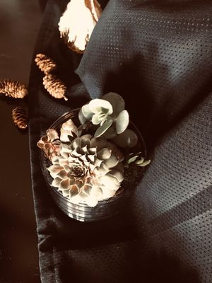 Succulent design for Sale in Irving, TX