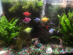 20 Gallon Fish Tank includes ALL the fish! for Sale in Los Angeles, CA