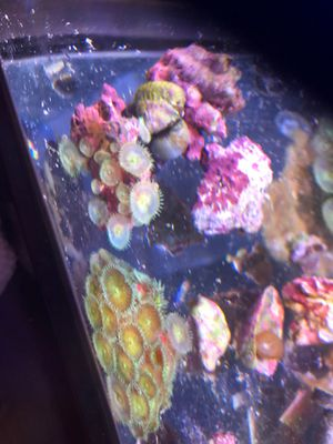 Aguarium. Live rock . Coral 15$ cheap price for Sale in Los Angeles, CA