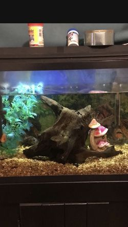 Fish Tank for Sale in Lawndale,  CA