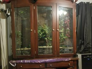 Chameleon cage / reptile cage / terrarium / vivarium for Sale in Chandler, AZ