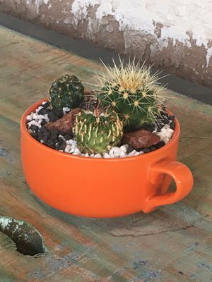 Beautiful cup with Cactus for Sale in Fontana, CA