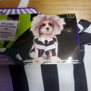 Beetlejuice Dog Costume for Sale in Pickerington, OH
