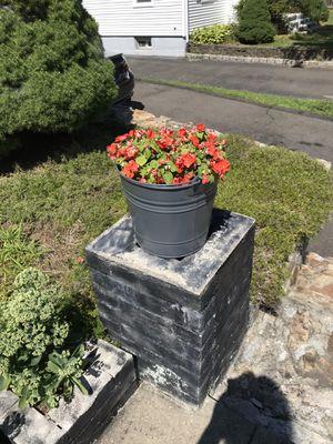 Bucket flowers for Sale in Bridgeport, CT