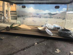 Reptiles for Sale in Salt Lake City, UT