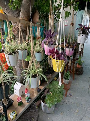 Plants de sol y sombra con colgadera s son pequeñas $10 each for Sale in Cudahy, CA