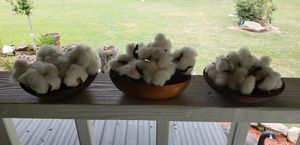 Small wooden bowl with genuine cotton for Sale in Farmville, VA