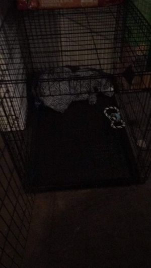 dog cage for Sale in Whiting, IN