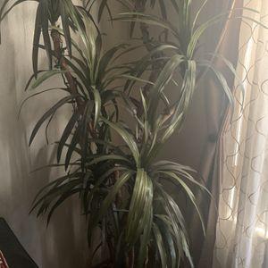 9 feet tall Silk Plant for Sale in Anaheim, CA