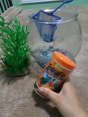 fish tank maximum 5 fish for Sale in Victoria, TX