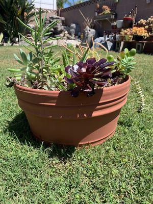 "14"" plastic pot for Sale in Anaheim, CA"