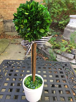 Topiary tree for Sale in Hinsdale, IL