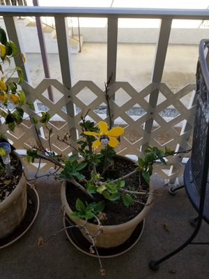 Plants for Sale for Sale in Upland, CA