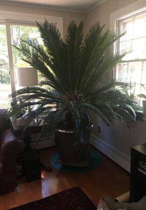 Planta for Sale in Concord, MA