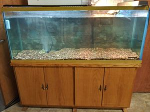 110 gallon aquarium w cabinet stand FULL SETUP *Turtle also available* for Sale in Milpitas, CA