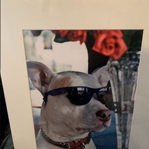 Dog Picture for Sale in Salinas, CA