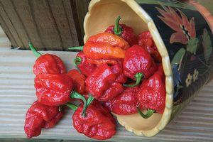 Carolina reapper pepper for Sale in Mesquite, TX