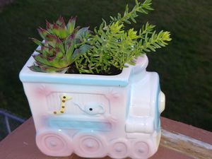 Cute Succulents for Sale in Spanaway, WA