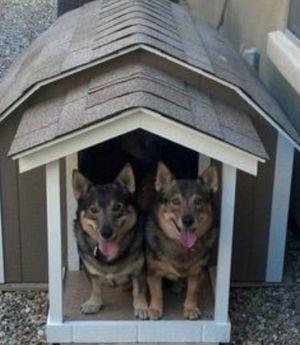 Custom dog houses starting at 50$ for Sale in Detroit, MI