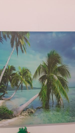 Palm tree pic for Sale in Homosassa, FL