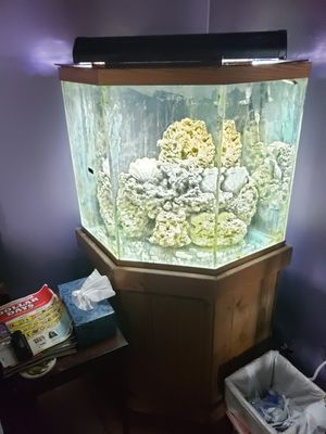 Saltwater tank for Sale in Lexington, KY