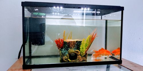 5 gallon Aquarium w/2 Gold fish for Sale in Village,  OK