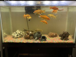 Selling 15 gallon fish tank with everything seen on the picture (no base) for Sale in Anaheim, CA