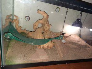 40 gallon Reptile Tank for Sale in Tolleson, AZ